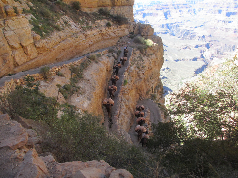 grand-canyon-hermit-pack-mule